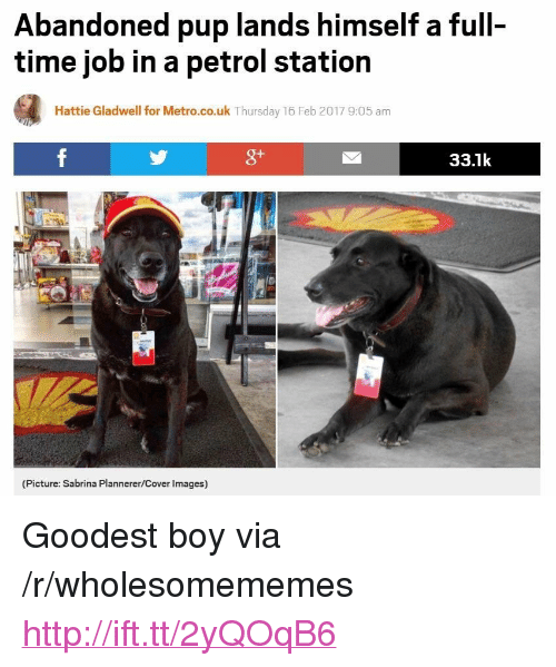 "Http, Images, and Metro: Abandoned pup lands himself a full-  time job in a petrol station  Hattie Gladwell for Metro.co.uk Thursday 16 Feb 2017 9:05 am  g+  33.1k  (Picture: Sabrina Plannerer/Cover Images) <p>Goodest boy via /r/wholesomememes <a href=""http://ift.tt/2yQOqB6"">http://ift.tt/2yQOqB6</a></p>"