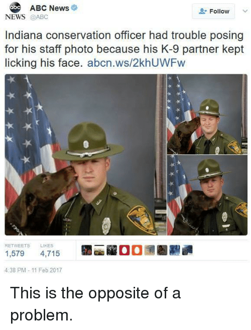 Abc, News, and Abc News: ABC News  Follow  NEWS @ABC  Indiana conservation officer had trouble posing  for his staff photo because his K-9 partner kept  licking his face. abcn.ws/2khUWFw  1,579 4,715  4:38 PM-11 Feb 2017 This is the opposite of a problem.