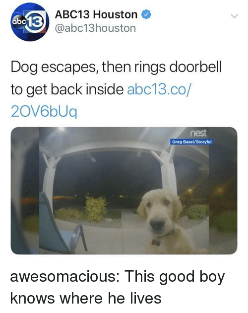 Tumblr, Abc13, and Blog: ABC13 Houston  @abc13houston  Dog escapes, then rings doorbell  to get back inside abc13.co/  2OV6bUq  nest  Greg Basel/Storyful awesomacious:  This good boy knows where he lives