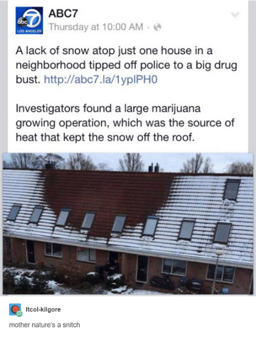 Motheres: ABC7  Thursday at 10:00 AM  A lack of snow atop just one house in a  neighborhood tipped off police to a big drug  bust. http://abc7.la/lyplPHO  Investigators found a large marijuana  growing operation, which was the source of  heat that kept the snow off the roof.  Itcol-kilgore  mother nature's a snitch