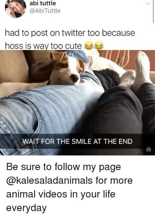 Animal Videos: abi tuttle  @AbiTuttle  had to post on twitter too because  hoss is way too cute  WAIT FOR THE SMILE AT THE END Be sure to follow my page @kalesaladanimals for more animal videos in your life everyday