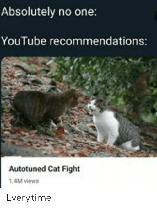 cat fight: Absolutely no one:  YouTube recommendations:  Autotuned Cat Fight  .4M views Everytime
