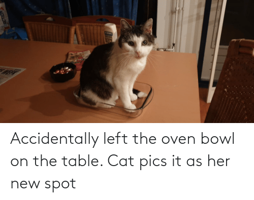 On The Table: Accidentally left the oven bowl on the table. Cat pics it as her new spot
