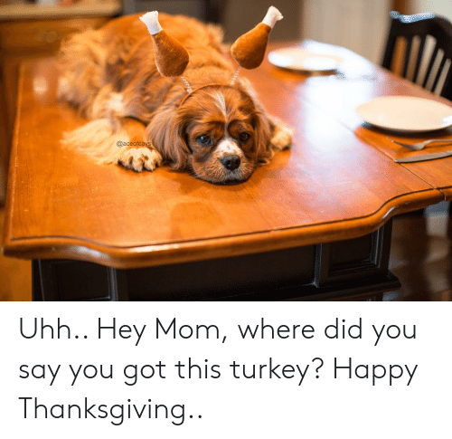 Thanksgiving, Happy, and Turkey: @aceofca Uhh.. Hey Mom, where did you say you got this turkey? Happy Thanksgiving..