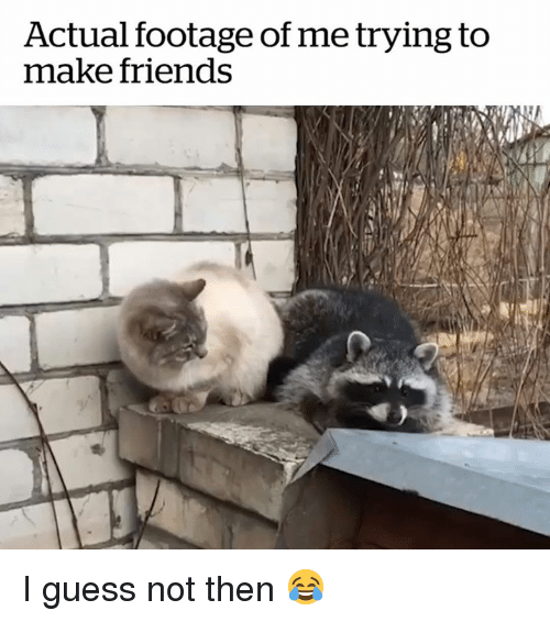 guess not: Actual footage of me trying to  make friends I guess not then 😂