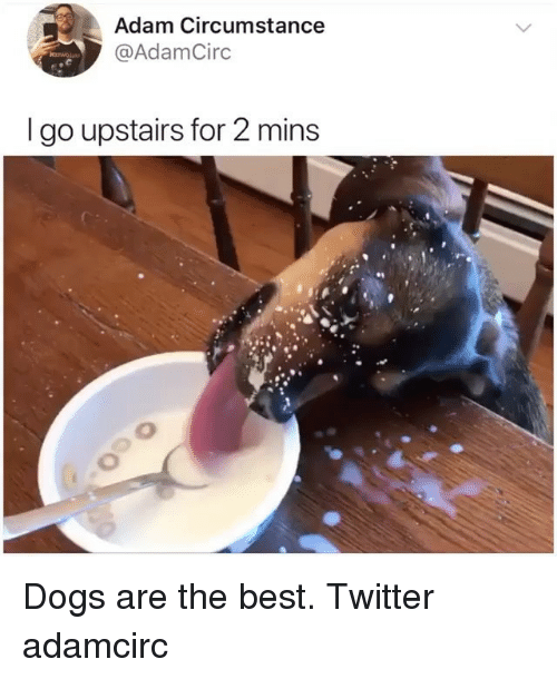 Dogs, Memes, and Twitter: Adam Circumstance  @AdamCirc  I go upstairs for 2 mins  0 Dogs are the best. Twitter adamcirc