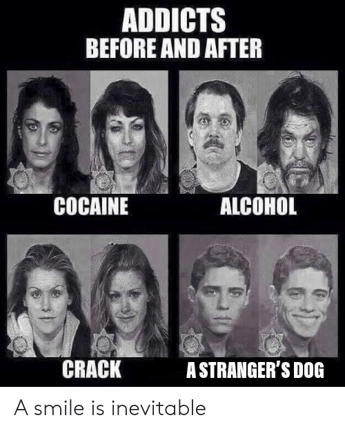 Alcohol, Cocaine, and Smile: ADDICTS  BEFORE AND AFTER  ALCOHOL  COCAINE  CRACK  ASTRANGER'S DOG A smile is inevitable
