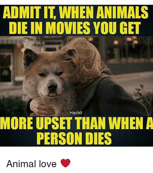 hachi: ADMITIT WHEN ANIMALS  DIE IN MOVIES YOU GET  Hachi!  MORE UPSET THAN WHEN A  PERSON DIES Animal love ❤️