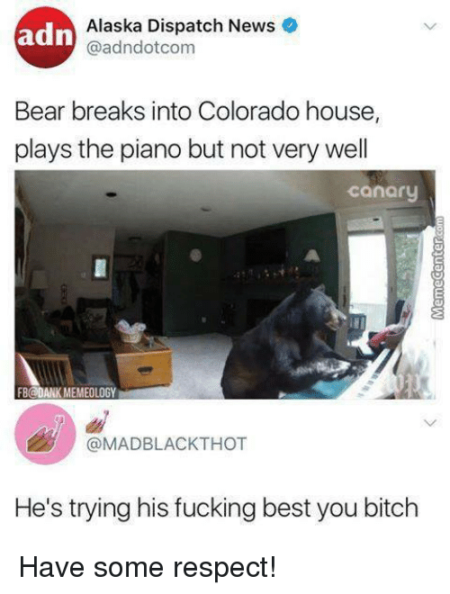 Bitch, Dank, and Fucking: adn  Alaska Dispatch News  @adndotcom  Bear breaks into Colorado house,  plays the piano but not very wel  canary  FB@DANK MEMEOLOGY  @MADBLACKTHOT  He's trying his fucking best you bitch Have some respect!