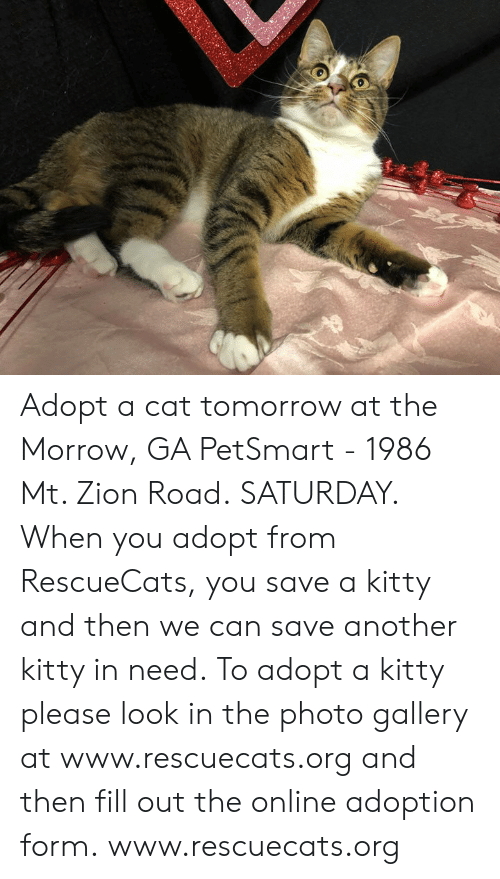 Memes, Petsmart, and Tomorrow: Adopt a cat tomorrow at the Morrow, GA PetSmart - 1986 Mt. Zion Road. SATURDAY.  When you adopt from RescueCats, you save a kitty and then we can save another kitty in need. To adopt a kitty please look in the photo gallery at www.rescuecats.org and then fill out the online adoption form.  www.rescuecats.org