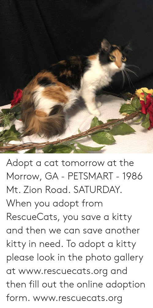 Memes, Petsmart, and Tomorrow: Adopt a cat tomorrow at the Morrow, GA - PETSMART - 1986 Mt. Zion Road. SATURDAY.  When you adopt from RescueCats, you save a kitty and then we can save another kitty in need. To adopt a kitty please look in the photo gallery at www.rescuecats.org and then fill out the online adoption form.  www.rescuecats.org