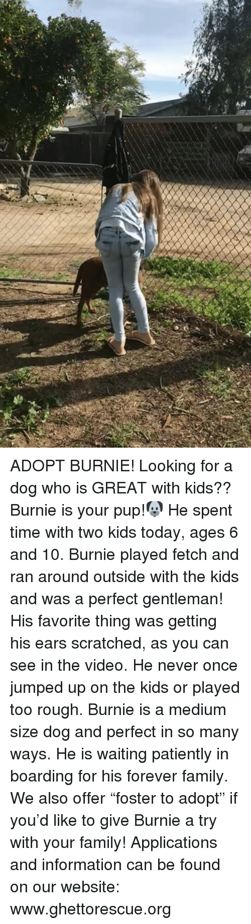 """Family, Memes, and Forever: ADOPT BURNIE! Looking for a dog who is GREAT with kids?? Burnie is your pup!🐶 He spent time with two kids today, ages 6 and 10.  Burnie played fetch and ran around outside with the kids and was a perfect gentleman! His favorite thing was getting his ears scratched, as you can see in the video. He never once jumped up on the kids or played too rough. Burnie is a medium size dog and perfect in so many ways. He is waiting patiently in boarding for his forever family. We also offer """"foster to adopt"""" if you'd like to give Burnie a try with your family! Applications and information can be found on our website:  www.ghettorescue.org"""
