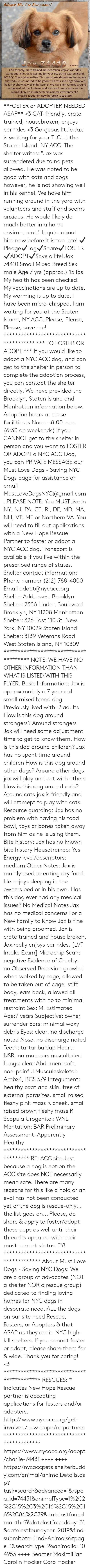 """Mentation: Adopt Me I'm Awesome!  Jax 74410  7 yrs young +15 lbs  CAT-friendly, crate trained, housebroken, enjoys car rides.  Gorgeous little Jax is waiting for your TLC at the Staten Island,  NY ACC. The shelter writes: """"Jax was surrendered due to no pets  allowed. He was noted to be good with cats and dogs however,  he is not showing well in his kennel. We have him running around  in the yard with volunteers and staff and seems anxious. He  would likely do much better in a home environment.""""  Inquire about him now before it is too late! **FOSTER or ADOPTER NEEDED ASAP** <3 CAT-friendly, crate trained, housebroken, enjoys car rides <3 Gorgeous little Jax is waiting for your TLC at the Staten Island, NY ACC. The shelter writes: """"Jax was surrendered due to no pets allowed. He was noted to be good with cats and dogs however, he is not showing well in his kennel. We have him running around in the yard with volunteers and staff and seems anxious. He would likely do much better in a home environment."""" Inquire about him now before it is too late!  ✔Pledge✔Tag✔Share✔FOSTER✔ADOPT✔Save a life!  Jax 74410 Small Mixed Breed Sex male Age 7 yrs (approx.) 15 lbs  My health has been checked.  My vaccinations are up to date. My worming is up to date.  I have been micro-chipped.   I am waiting for you at the Staten Island, NY ACC.  Please, Please, Please, save me!  **************************************** *** TO FOSTER OR ADOPT ***   If you would like to adopt a NYC ACC dog, and can get to the shelter in person to complete the adoption process, you can contact the shelter directly. We have provided the Brooklyn, Staten Island and Manhattan information below. Adoption hours at these facilities is Noon – 8:00 p.m. (6:30 on weekends)  If you CANNOT get to the shelter in person and you want to FOSTER OR ADOPT a NYC ACC Dog, you can PRIVATE MESSAGE our Must Love Dogs - Saving NYC Dogs page for assistance or email MustLoveDogsNYC@gmail.com.   PLEASE NOTE: You MUST live in NY, NJ, PA, CT,"""