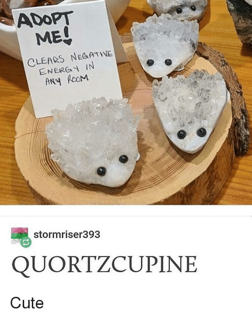 Cute, Girl Memes, and Adopt: ADOPT  MEO  CLEARS NEGATNE  ENERG IN  stormriser393  QUORTZCUPINE Cute