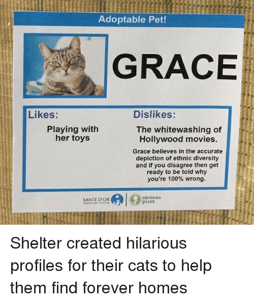 Anaconda, Cats, and Funny: Adoptable Pet!  GRACE  Likes:  Dislikes:  Playing with  her toys  The whitewashing of  Hollywood movies.  Grace believes in the accurate  depiction of ethnic diversity  and if you disagree then get  ready to be told why  you're 100% wrong.  SANTÉ D'OR  obvious  plant Shelter created hilarious profiles for their cats to help them find forever homes