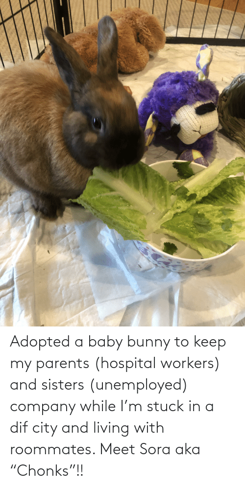 """Unemployed: Adopted a baby bunny to keep my parents (hospital workers) and sisters (unemployed) company while I'm stuck in a dif city and living with roommates. Meet Sora aka """"Chonks""""!!"""
