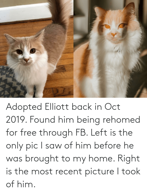 oct: Adopted Elliott back in Oct 2019. Found him being rehomed for free through FB. Left is the only pic I saw of him before he was brought to my home. Right is the most recent picture I took of him.