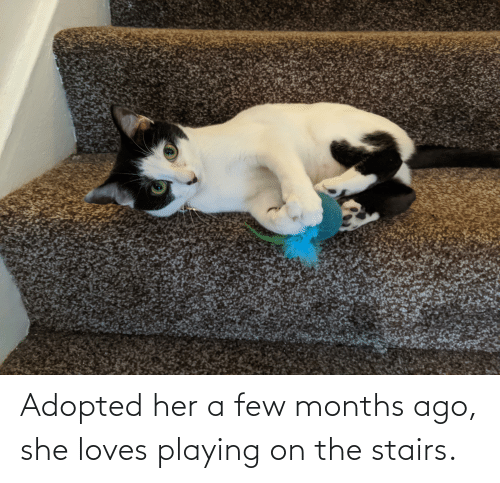 a-few-months: Adopted her a few months ago, she loves playing on the stairs.