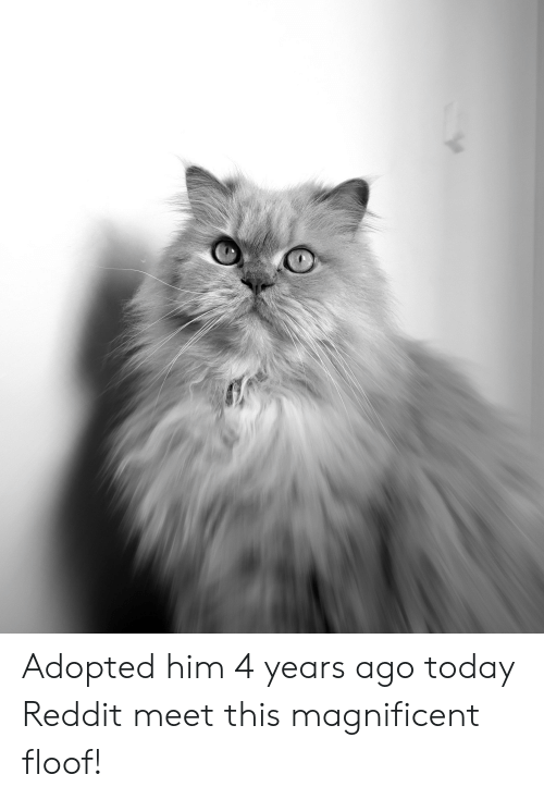 Reddit, Today, and Magnificent: Adopted him 4 years ago today Reddit meet this magnificent floof!