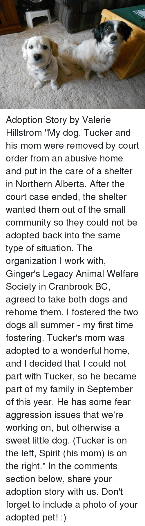 """animal welfare: Adoption Story by Valerie Hillstrom  """"My dog, Tucker and his mom were removed by court order from an abusive home and put in the care of a shelter in Northern Alberta. After the court case ended, the shelter wanted them out of the small community so they could not be adopted back into the same type of situation. The organization I work with, Ginger's Legacy Animal Welfare Society in Cranbrook BC, agreed to take both dogs and rehome them. I fostered the two dogs all summer - my first time fostering. Tucker's mom was adopted to a wonderful home, and I decided that I could not part with Tucker, so he became part of my family in September of this year. He has some fear aggression issues that we're working on, but otherwise a sweet little dog. (Tucker is on the left, Spirit (his mom) is on the right.""""  In the comments section below, share your adoption story with us. Don't forget to include a photo of your adopted pet! :)"""