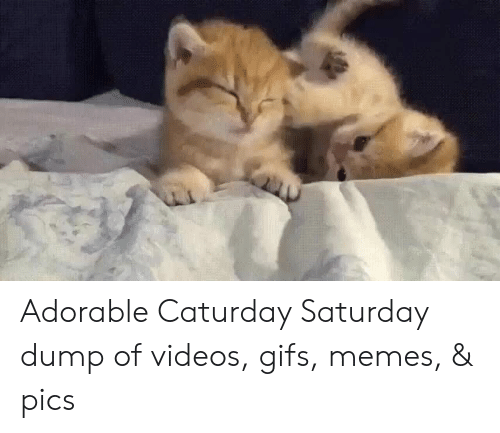 Caturday Saturday: Adorable Caturday Saturday dump of videos, gifs, memes, & pics