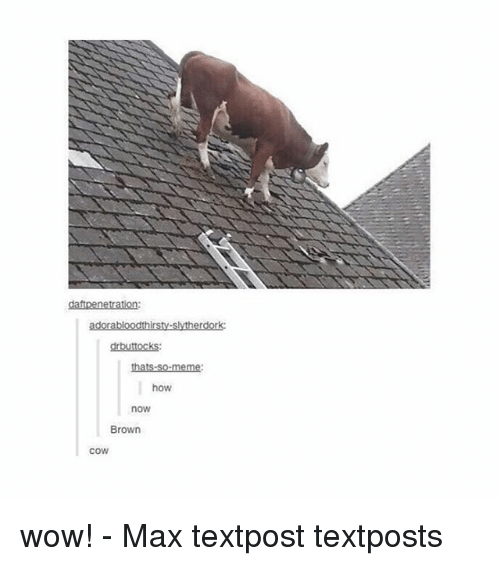 Memes, Wow, and 🤖: adorabloodthirsty-slytherdork  drbuttockS:  how  now  Brown  cow wow! - Max textpost textposts