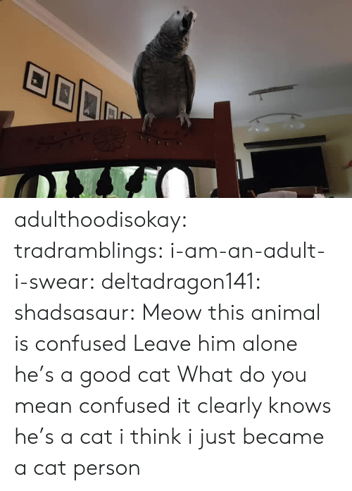 Being Alone, Confused, and Target: adulthoodisokay: tradramblings:  i-am-an-adult-i-swear:  deltadragon141:  shadsasaur: Meow  this animal is confused   Leave him alone he's a good cat   What do you mean confused it clearly knows he's a cat  i think i just became a cat person