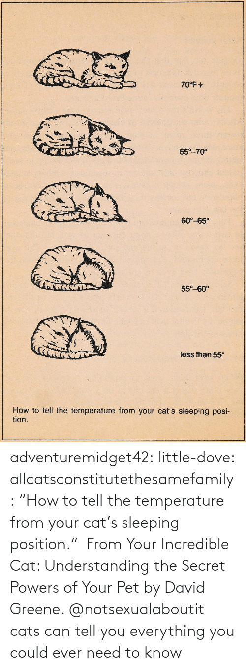 "Search: adventuremidget42:  little-dove:  allcatsconstitutethesamefamily: ""How to tell the temperature from your cat's sleeping position.""  From Your Incredible Cat: Understanding the Secret Powers of Your Pet by David Greene.    @notsexualaboutit   cats can tell you everything you could ever need to know"