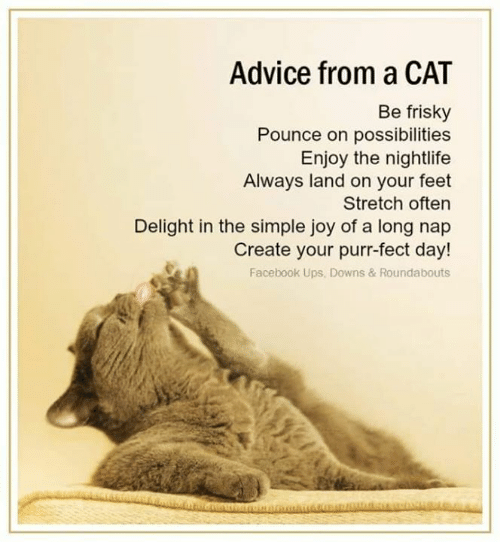 Advice From A Cat Be Frisky Pounce On Possibilities Enjoy The Nightlife Always Land On Your Feet Stretch Often Delight In The Simple Joy Of A Long Nap Create Your Purr Fect Day