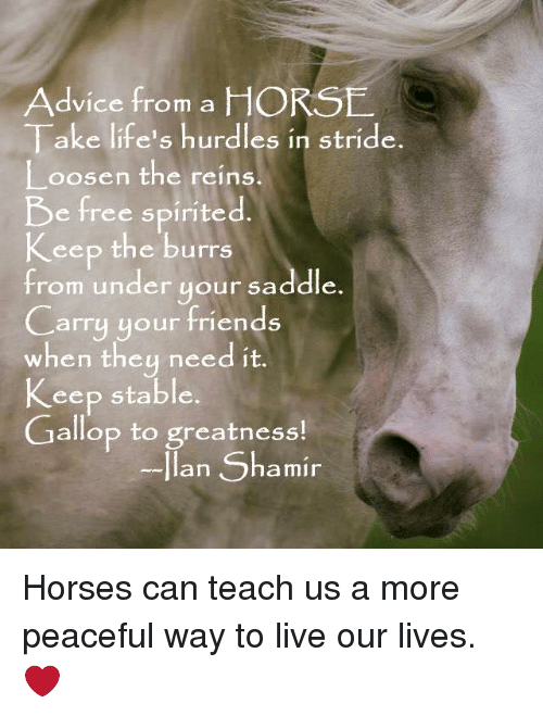 saddles: Advice from a HORSE  Take life's hurdles in stride.  Loosen the reins  e free spirited  Keep the burns  from under your saddle  Carry your friends  when they need it.  Keep stable  Gallop to greatness  an  Shamir Horses can teach us a more peaceful way to live our lives. ❤️