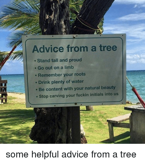 initials: Advice from a tree  . Stand tall and proud  . Go out on a limb  . Remember your roots  e Drink plenty of water  Be content with your natural beauty  Stop carving your fuckin initials into us some helpful advice from a tree