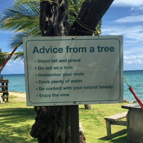 Advice, The View, and Tree: Advice from a tree  Stand tall and proud  Go out on a limb  Remember your roots  Drink plenty of water  Be content with your natural beauty  Enjoy the view