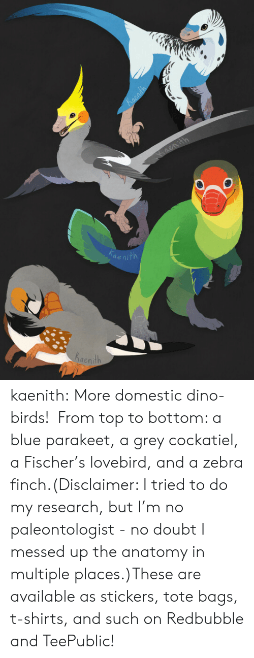 Dinosaur, Tumblr, and Birds: ae  Kaenith kaenith:  More domestic dino-birds!  From top to bottom: a blue parakeet, a grey cockatiel, a Fischer's lovebird, and a zebra finch.(Disclaimer: I tried to do my research, but I'm no paleontologist - no doubt I messed up the anatomy in multiple places.)These are available as stickers, tote bags, t-shirts, and such on Redbubble and TeePublic!