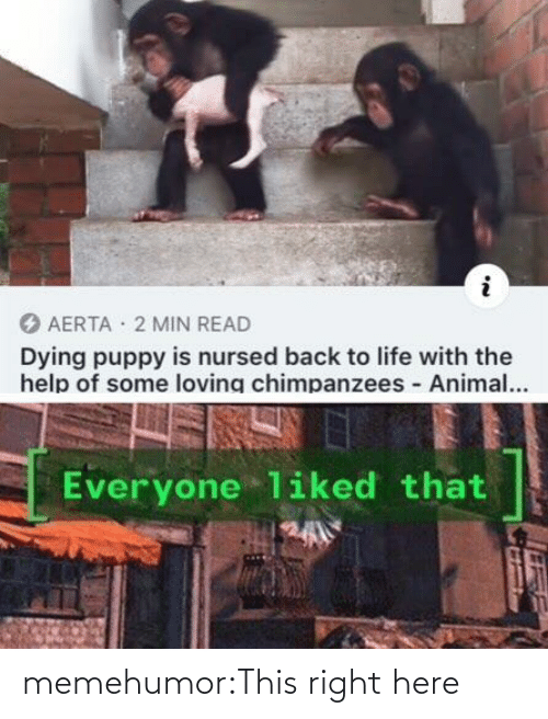 Loving: AERTA · 2 MIN READ  Dying puppy is nursed back to life with the  help of some loving chimpanzees Animal...  Everyone liked that memehumor:This right here