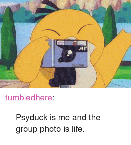 """Psyduck: AF <p><a class=""""tumblr_blog"""" href=""""http://tumbledhere.tumblr.com/post/73808640470/psyduck-is-me-and-the-group-photo-is-life"""" target=""""_blank"""">tumbledhere</a>:</p> <blockquote> <p>Psyduck is me and the group photo is life.</p> </blockquote>"""