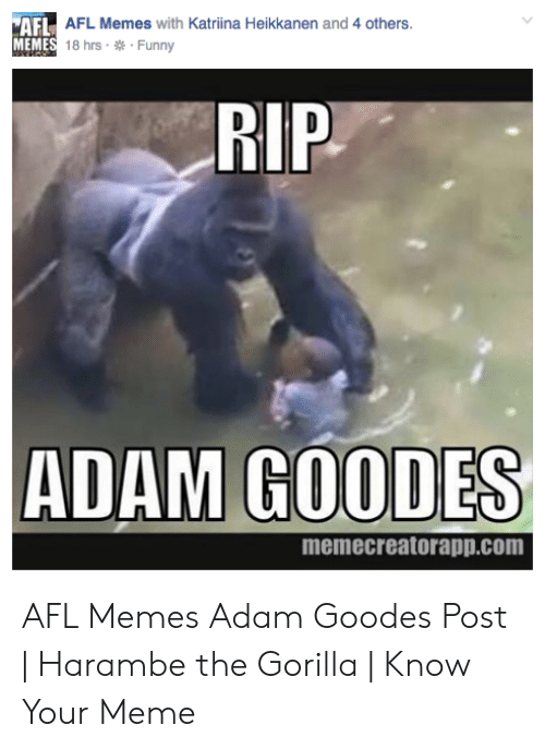 Gorilla Memes: AFL AFL Memes with Katriina Heikkanen and 4 others  MEMES 18 hrs Funny  RIP  ADAM GOODES  memecreatorapp.com AFL Memes Adam Goodes Post   Harambe the Gorilla   Know Your Meme