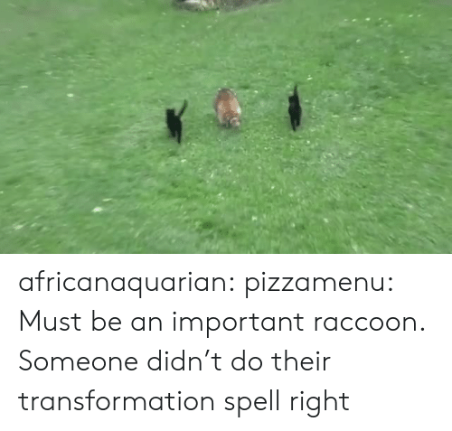 Tumblr, Blog, and Http: africanaquarian: pizzamenu: Must be an important raccoon.   Someone didn't do their transformation spell right