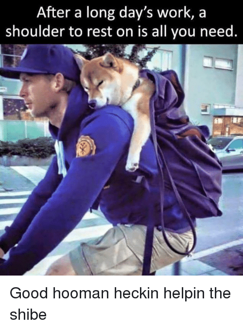 Shibes: After a long day's work, a  shoulder to rest on is all you need. Good hooman heckin helpin the shibe