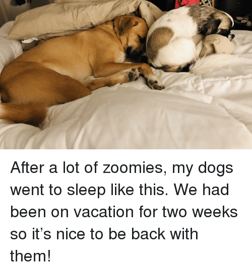 Dogs, Zoomies, and Vacation