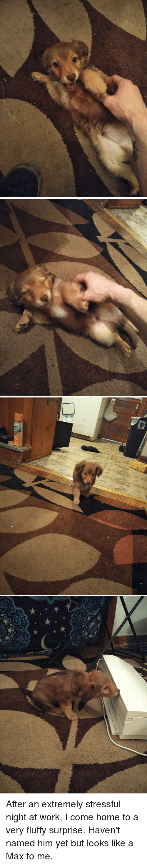 Work, Home, and Him: After an extremely stressful night at work, I come home to a very fluffy surprise. Haven't named him yet but looks like a Max to me.