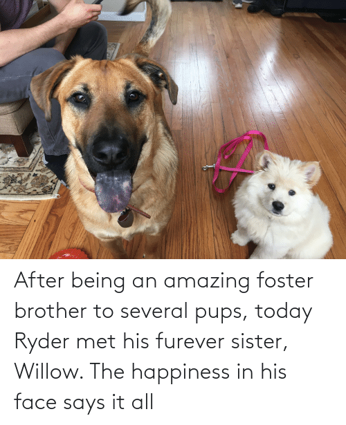 willow: After being an amazing foster brother to several pups, today Ryder met his furever sister, Willow. The happiness in his face says it all