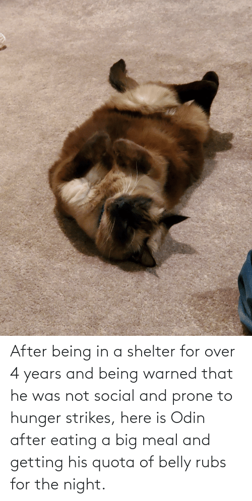 He Was: After being in a shelter for over 4 years and being warned that he was not social and prone to hunger strikes, here is Odin after eating a big meal and getting his quota of belly rubs for the night.