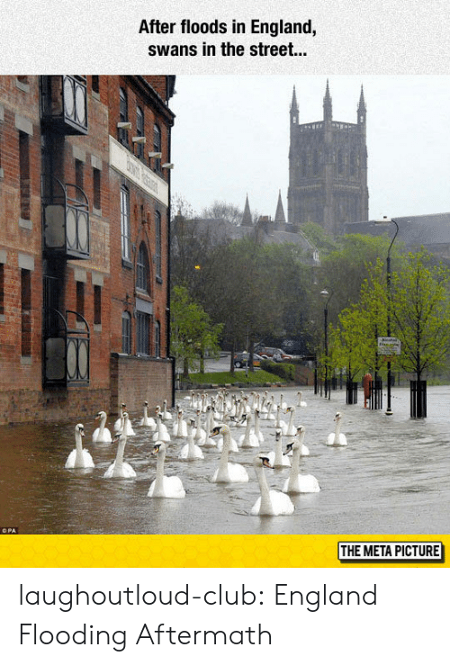 Flooding: After floods in England,  swans in the street...  THE META PICTURE laughoutloud-club:  England Flooding Aftermath