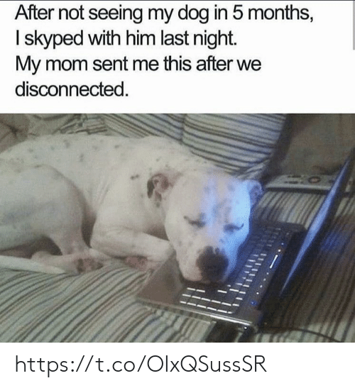 Memes, Mom, and 🤖: After not seeing my dog in 5 months,  I skyped with him last night.  My mom sent me this after we  disconnected. https://t.co/OIxQSussSR