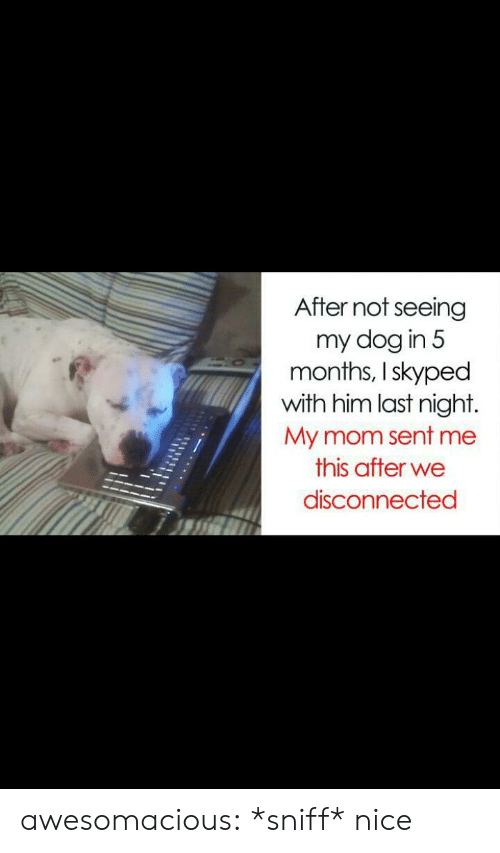 Dog In: After not seeing  my dog in 5  months, I skyped  with him last night.  My mom sent me  this after we  disconnected awesomacious:  *sniff* nice