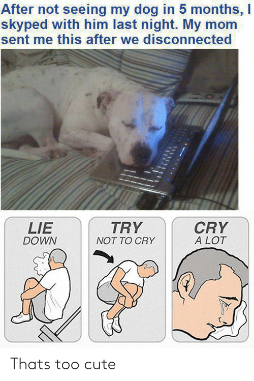 Dog In: After not seeing my dog in 5 months, I  skyped with him last night. My mom  sent me this after we disconnected  TRY  CRY  A LOT  LIE  DOWN  NOT TO CRY Thats too cute