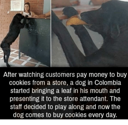 Cookies, Dank, and Money: After watching customers pay money to buy  cookies from a store, a dog in Colombia  started bringing a leaf in his mouth and  presenting it to the store attendant. The  staff decided to play along and now the  dog comes to buy cookies every day.