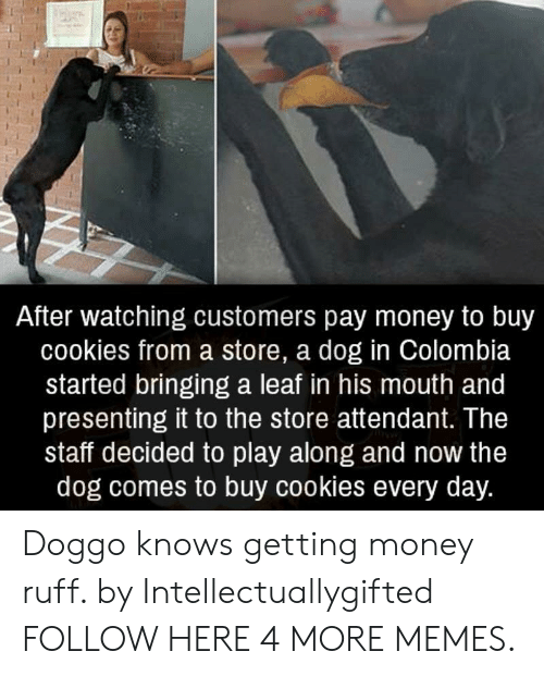 Getting Money: After watching customers pay money to buy  cookies from a store, a dog in Colombia  started bringing a leaf in his mouth and  presenting it to the store attendant. The  staff decided to play along and now the  dog comes to buy cookies every day. Doggo knows getting money ruff. by Intellectuallygifted FOLLOW HERE 4 MORE MEMES.