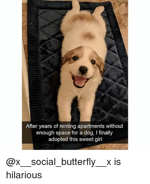 renting: After years of renting apartments without  enough space for a dog, I finally  adopted this sweet girl @x__social_butterfly__x is hilarious