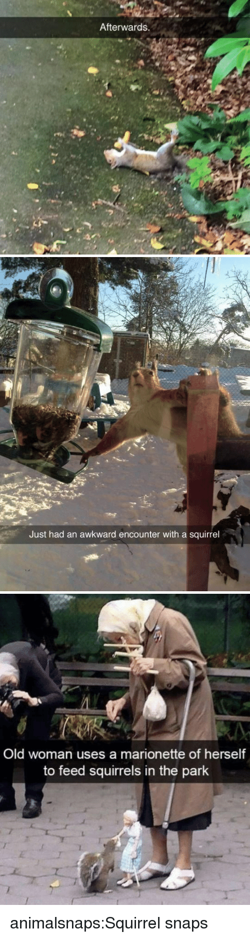 Old woman: Afterwards.   Just had an awkward encounter with a squirrel   Old woman uses a marionette of herself  to feed squirrels in the park animalsnaps:Squirrel snaps